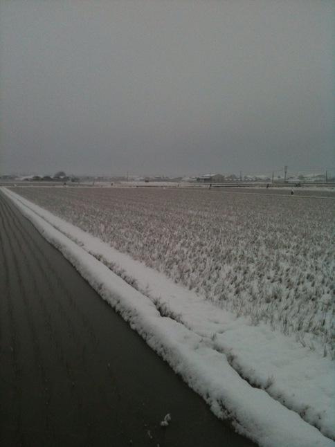 雪化粧・い草